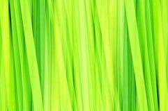 Abstract groen blad royalty-vrije illustratie