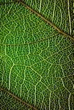 Abstract groen blad als achtergrond Stock Foto