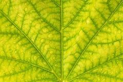 Abstract groen blad met de textuur van waterdalingen voor achtergrond Royalty-vrije Stock Afbeelding