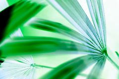 Abstract groen blad met exemplaarruimte Stock Foto