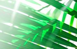 Abstract groen blad met exemplaarruimte Royalty-vrije Stock Foto's