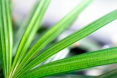 Abstract groen of blauw blad met exemplaarruimte, die voor backgrou gebruiken Stock Foto's