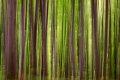 Abstract groen bos Royalty-vrije Stock Fotografie