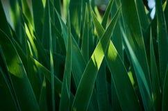 Abstract Groen gras als achtergrond tijdens Zonsopgang Stock Foto