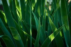 Abstract Groen gras als achtergrond tijdens Zonsopgang Royalty-vrije Stock Fotografie