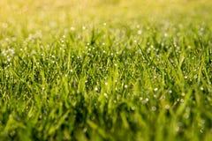 Abstract groen gras natuurlijke als achtergrond een mooie Bokeh Royalty-vrije Stock Fotografie