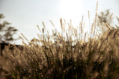 Abstract groen gras natuurlijke als achtergrond met een mooie Bokeh Stock Afbeelding