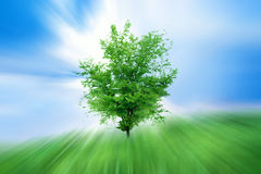 Abstract Growing Royalty Free Stock Images