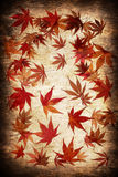 Abstract grunge autumn background Royalty Free Stock Photo