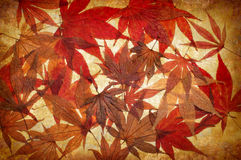 Abstract grunge autumn background with leaves Stock Images