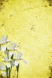 Abstract grunge background. Abstract background with  beautiful flowers in the bottom corner Royalty Free Stock Images