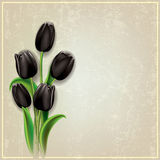 Abstract grunge background with black tulips Stock Image