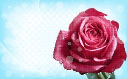 Abstract grunge background with rose. Stock Images