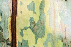 Abstract Background - Bark Royalty Free Stock Photography