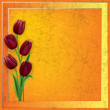 Abstract grunge background with tulips Stock Images