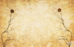 Abstract grunge floral background Royalty Free Stock Photos