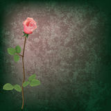 Abstract grunge floral background with rose Royalty Free Stock Images