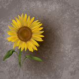Abstract grunge floral background with sunflower Royalty Free Stock Image