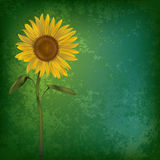Abstract grunge floral background with sunflower Royalty Free Stock Images