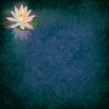 Abstract grunge illustration with lotus Stock Image