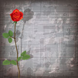 Abstract grunge music background with red rose Stock Image