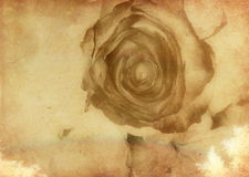 Abstract grunge rose. Abstract grunge background, texture with rose Royalty Free Stock Photos