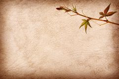 Abstract grunge texture background with leafs Royalty Free Stock Photo