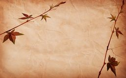 Abstract grunge texture background with leafs Royalty Free Stock Image