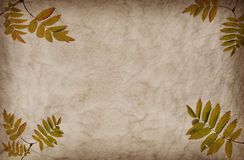 Abstract grunge texture background with leafs Stock Images