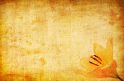 Abstract grunge yellow lilly background Royalty Free Stock Images
