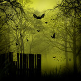 Abstract Halloween backgrounds Stock Photo