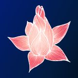 Abstract hand drawn lotus flower. Vector illustration. Outline sketch. Top view.  royalty free stock photography