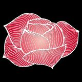 Abstract hand drawn pink rose flower isolated on black background.  illustration. Line art. Sketch.  royalty free illustration
