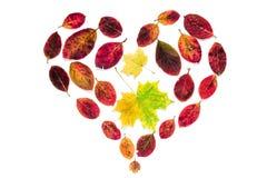Abstract hartsymbool van gele esdoorn en rode die bladeren op witte achtergrond voor bloggen, tijdschriften, artikelen wordt geïs Royalty-vrije Stock Afbeelding