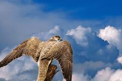 Abstract hawk eagle under sky Stock Photos