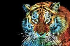 Abstract Head of The Tiger Stock Image