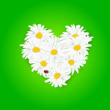 Abstract heart from daisy flowers and ladybug. On green background - vector illustration Stock Images