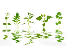 Abstract Herb Leaves stock photo
