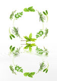Abstract Herbs Stock Images