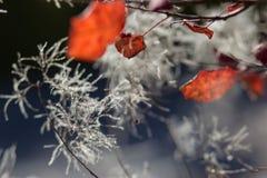 Abstract herfst achtergrondverstandgebladerte Royalty-vrije Stock Afbeeldingen