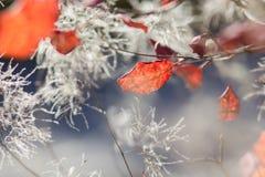 Abstract herfst achtergrondverstandgebladerte Stock Fotografie