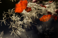 Abstract herfst achtergrondverstandgebladerte Stock Foto