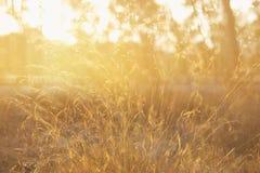 abstract herfst dromerig beeld van bos bij zonsonderganglicht Royalty-vrije Stock Foto