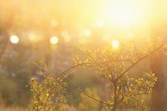 abstract herfst dromerig beeld van bos bij zonsonderganglicht Royalty-vrije Stock Afbeeldingen