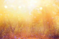 abstract herfst dromerig beeld van bos bij zonsonderganglicht Stock Afbeelding