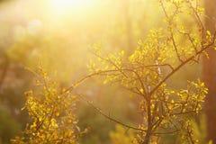 abstract herfst dromerig beeld van bos bij zonsonderganglicht Royalty-vrije Stock Foto's