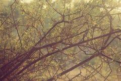 abstract herfst dromerig beeld van bos bij zonsonderganglicht Stock Fotografie