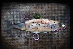 Abstract herring fish with spices on old grunge metal plate creative still life royalty free stock photo