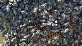 Abstract hexagon structure is honeycomb from bee hive filled with golden honey. stock video footage