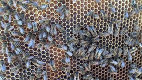 Abstract hexagon structure is honeycomb from bee hive filled with golden honey. stock video